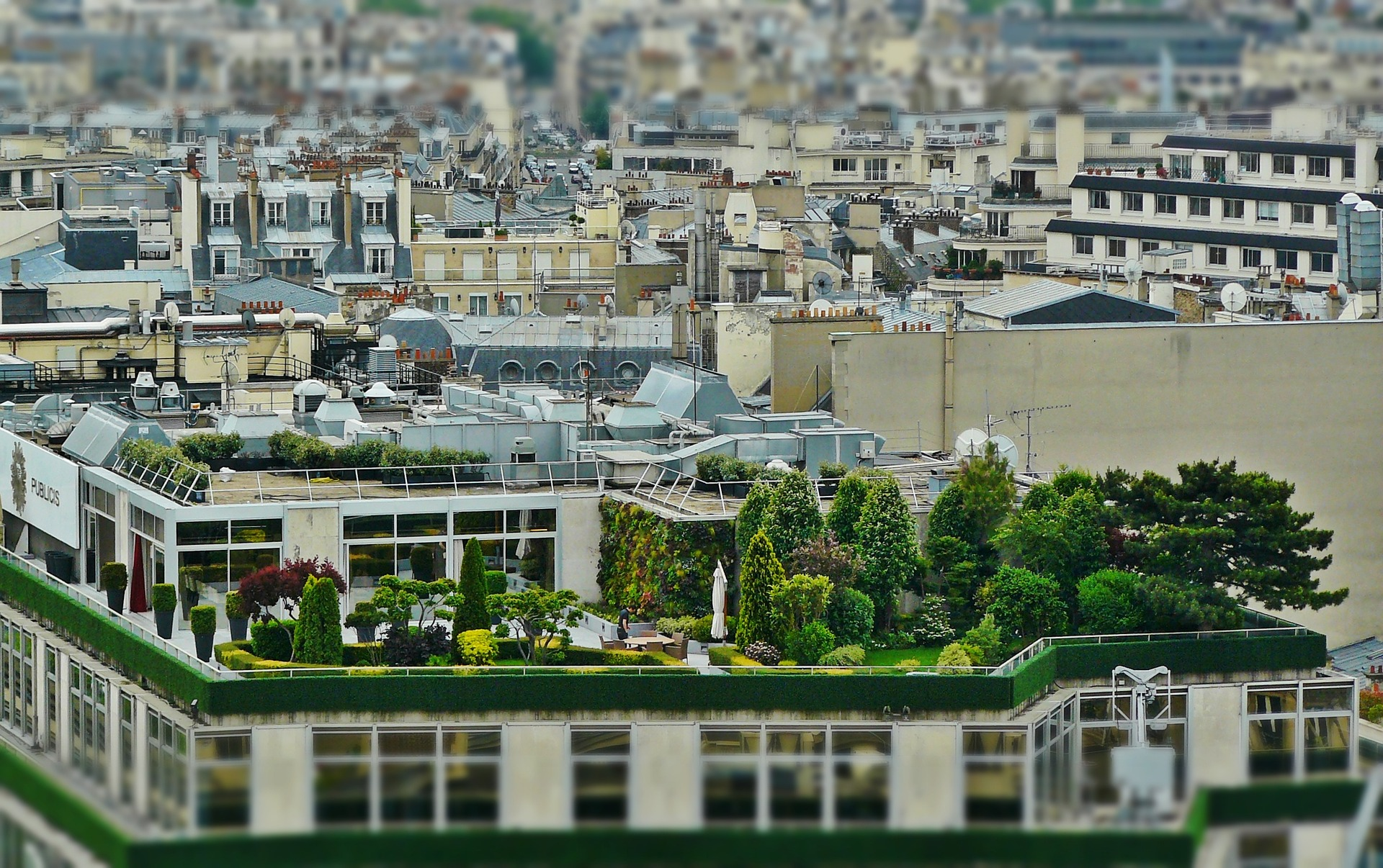 garden on the roof