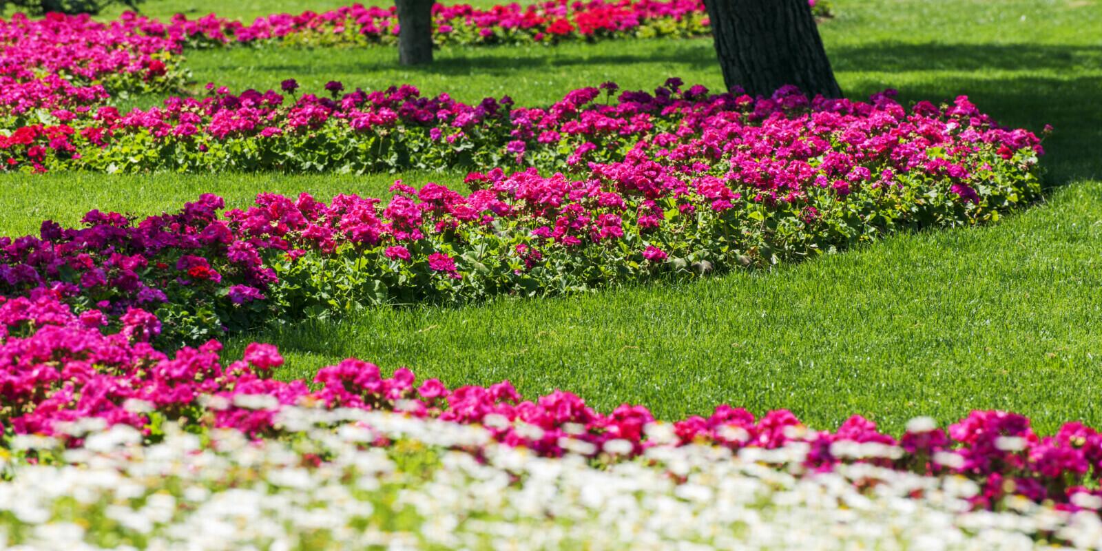 Flowers bed in ornamental garden.